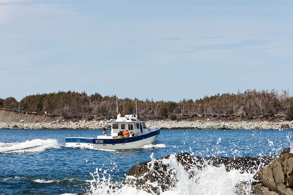 A lobster boat returns to Port Bickerton